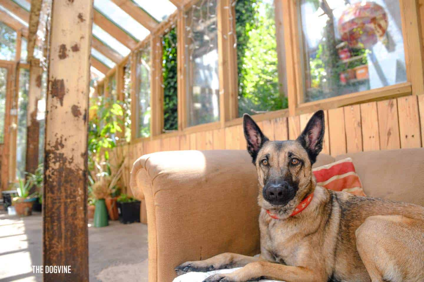 My Dog Friendly London By Lyra the Malinois - Dog Friendly Dalston and Hackney 10