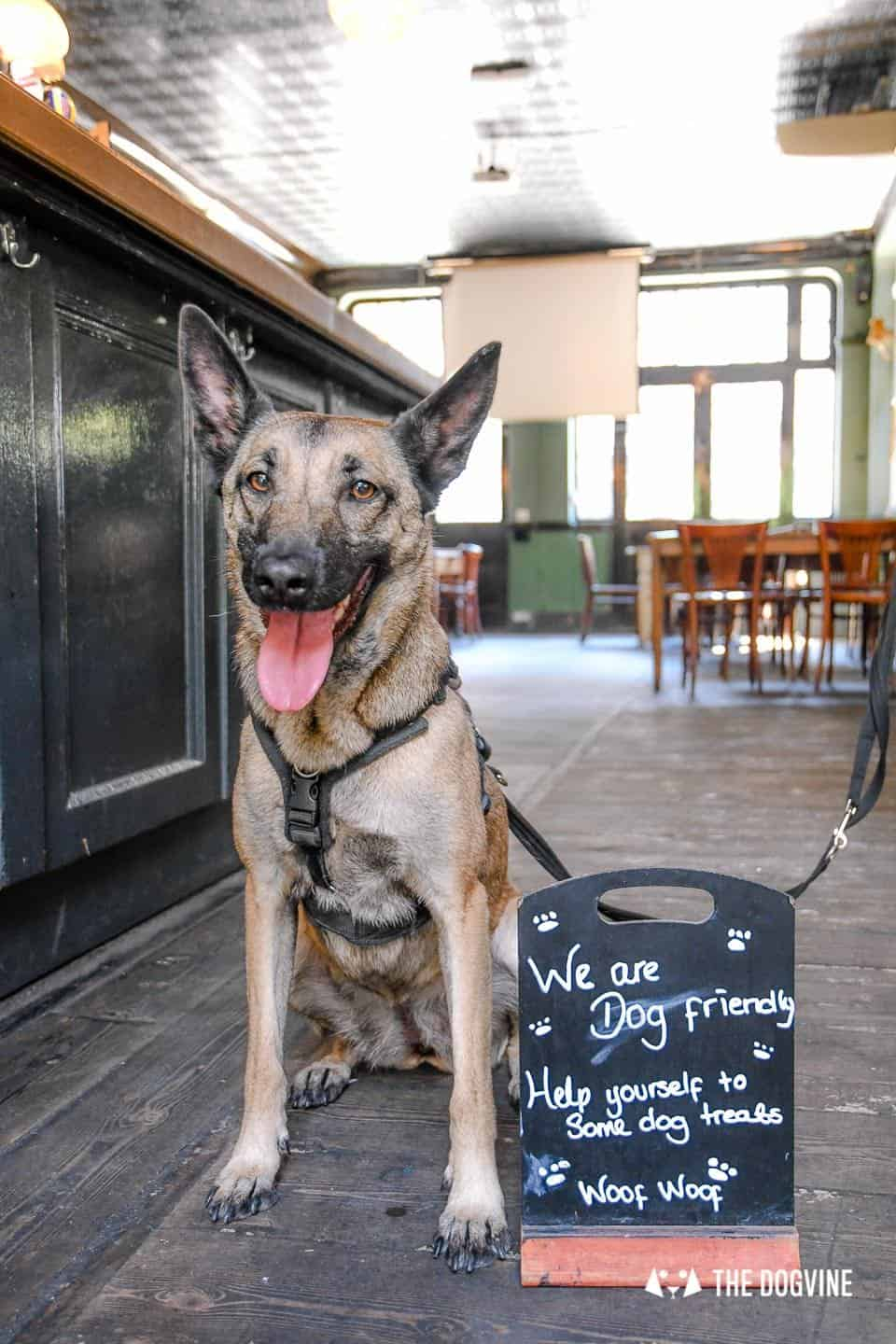 My Dog Friendly London By Lyra the Malinois - Dog Friendly Dalston and Hackney 18