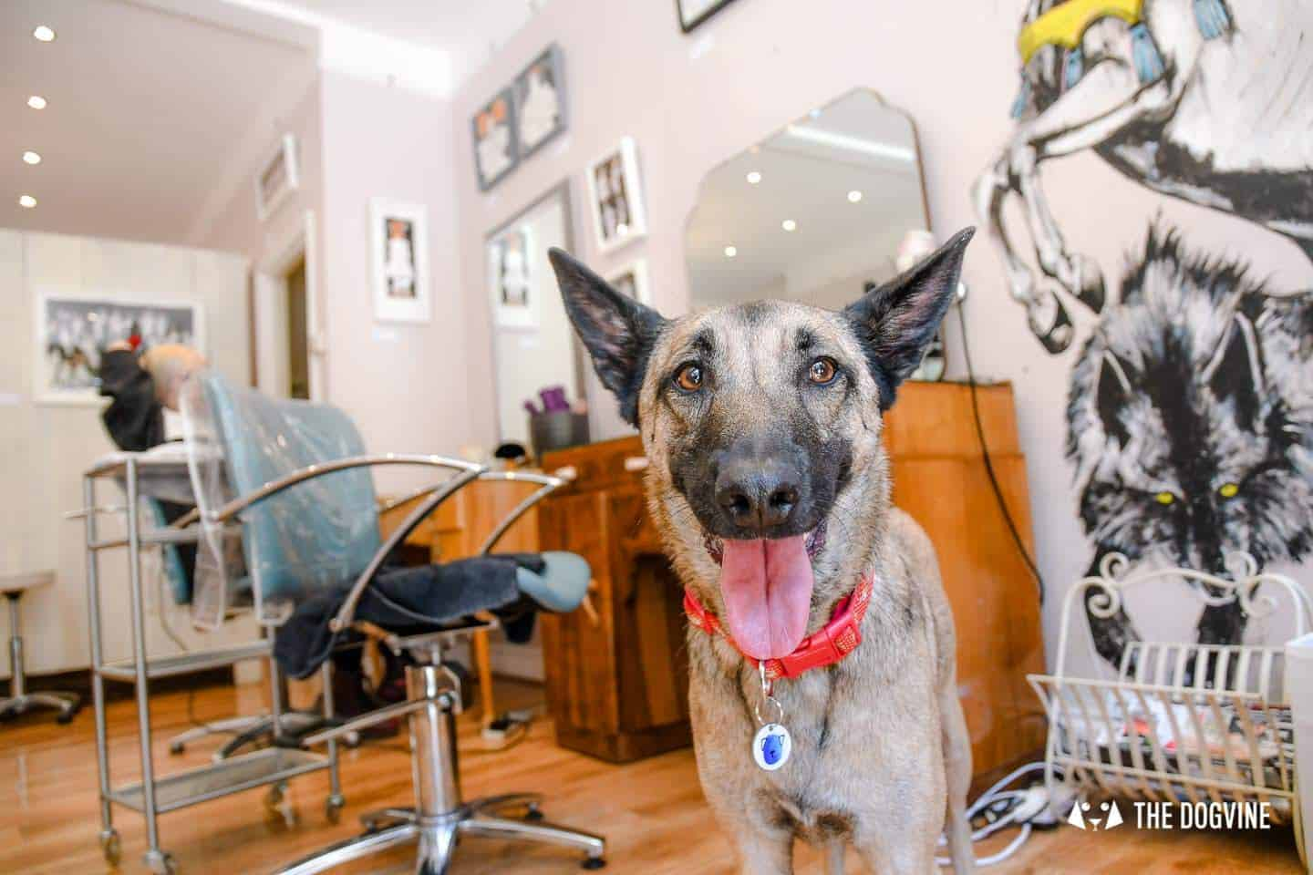 My Dog Friendly London By Lyra the Malinois - Dog Friendly Dalston and Hackney 23