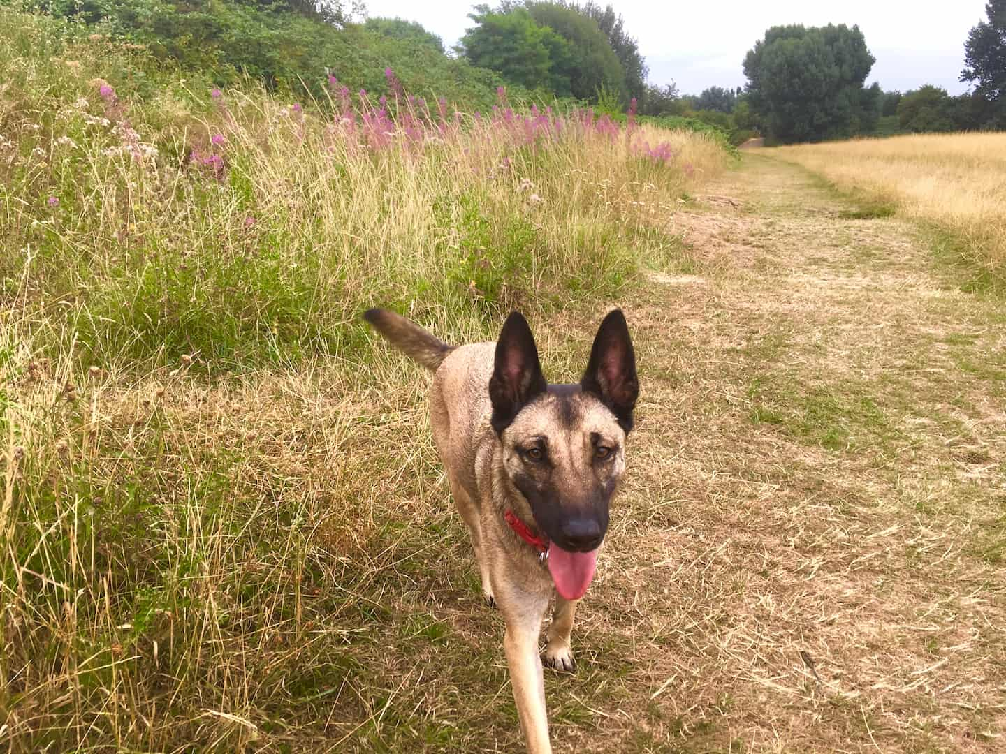 My Dog Friendly London By Lyra the Malinois - Dog Friendly Dalston and Hackney 26
