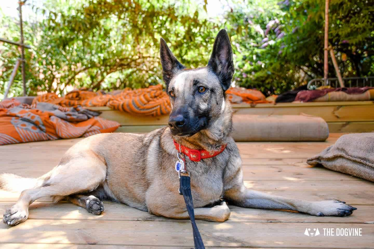My Dog Friendly London By Lyra the Malinois - Dog Friendly Dalston and Hackney 27