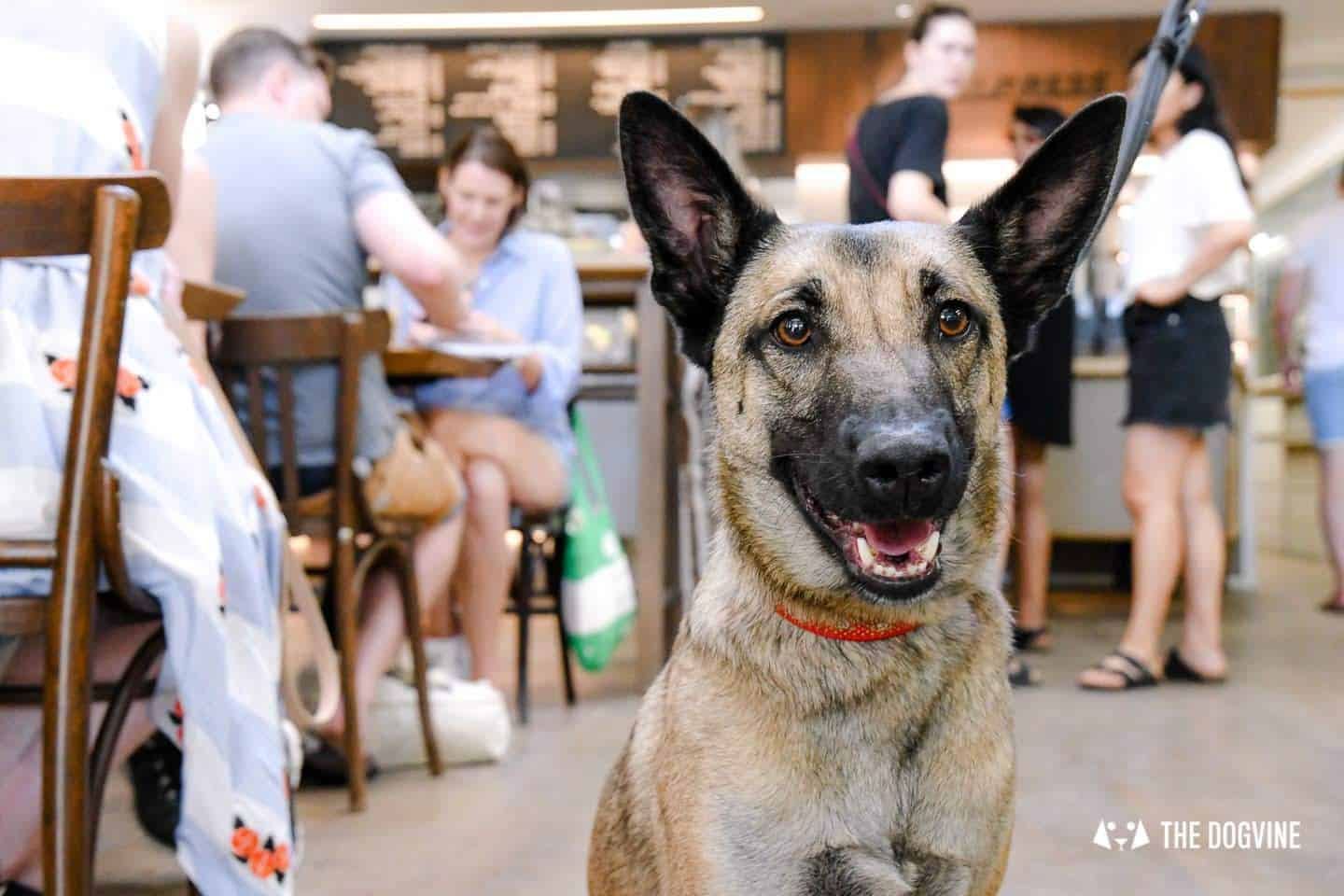 My Dog Friendly London By Lyra the Malinois - Dog Friendly Dalston and Hackney 5