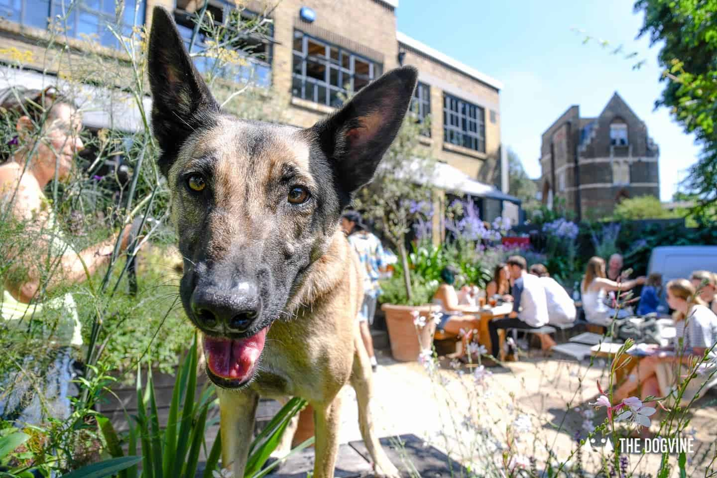My Dog Friendly London By Lyra the Malinois - Dog Friendly Dalston and Hackney 7