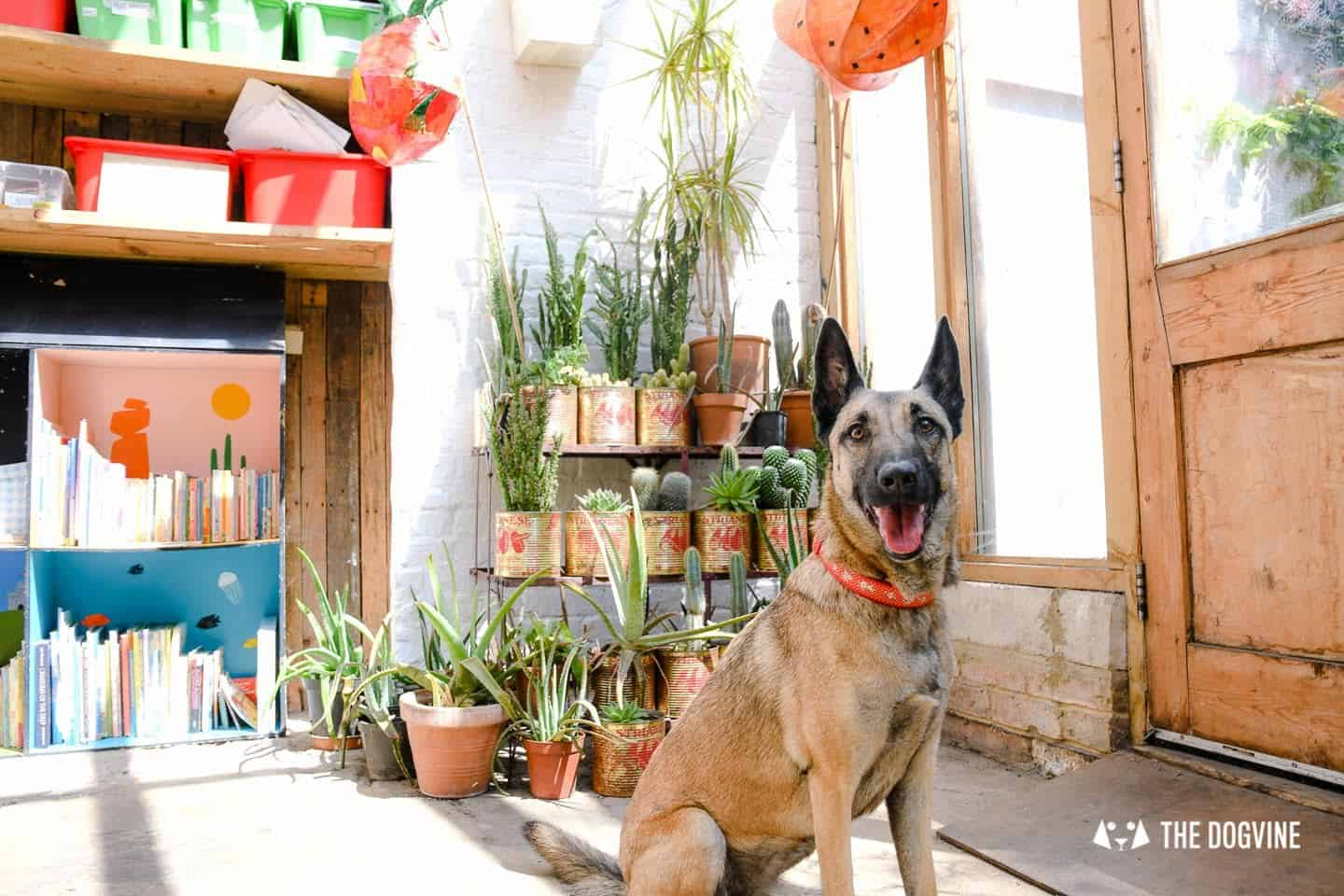 My Dog Friendly London By Lyra the Malinois - Dog Friendly Dalston and Hackney 9