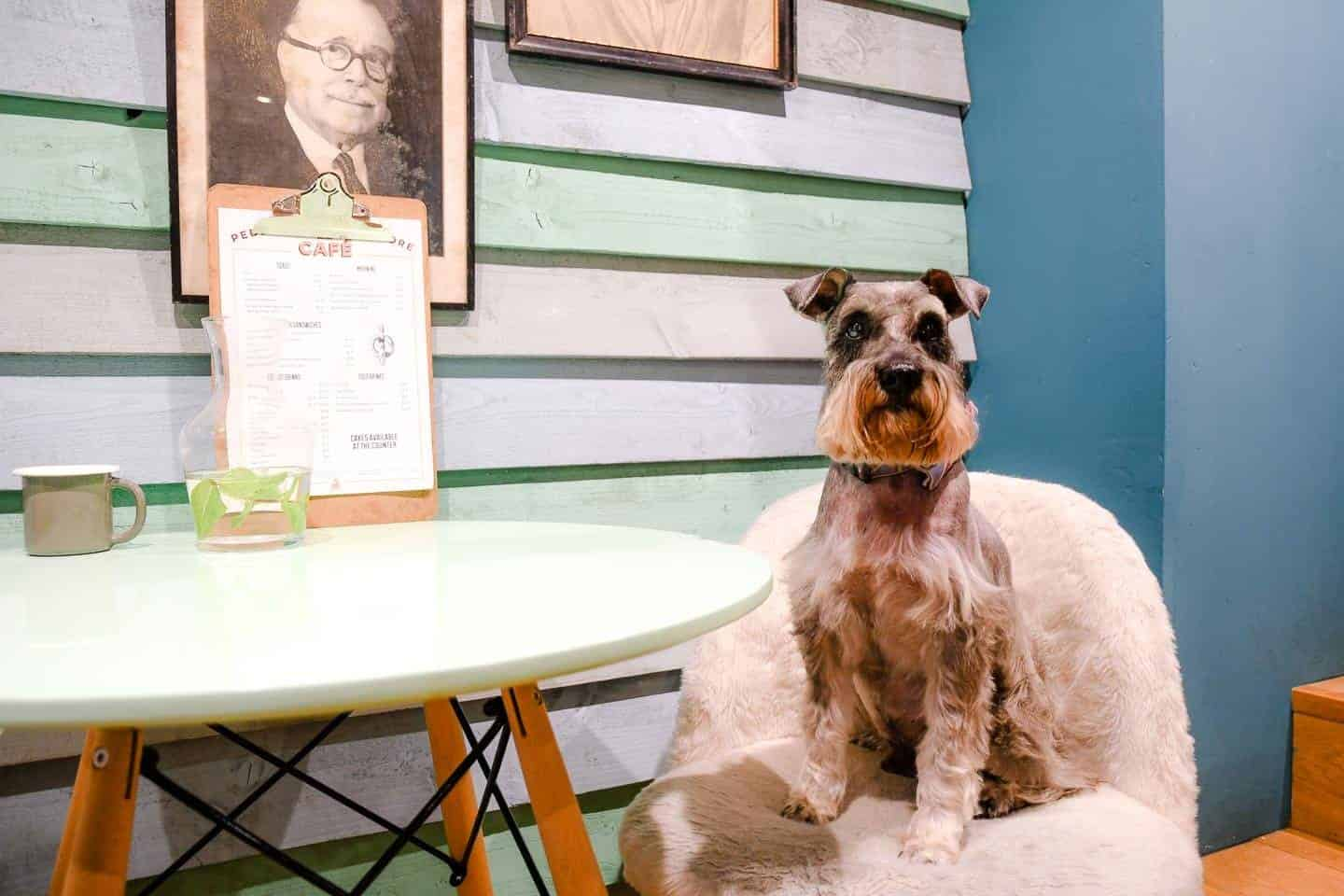 My Dog Friendly London By Pepper Chung The Schnauzer | Notting Hill