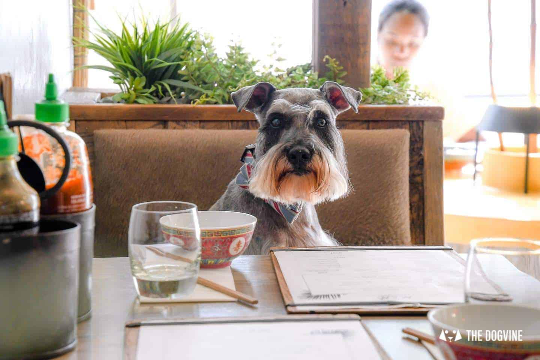 My Dog Friendly London By Pepper Chung the Schnauzer - Dog Friendly Notting Hill 12