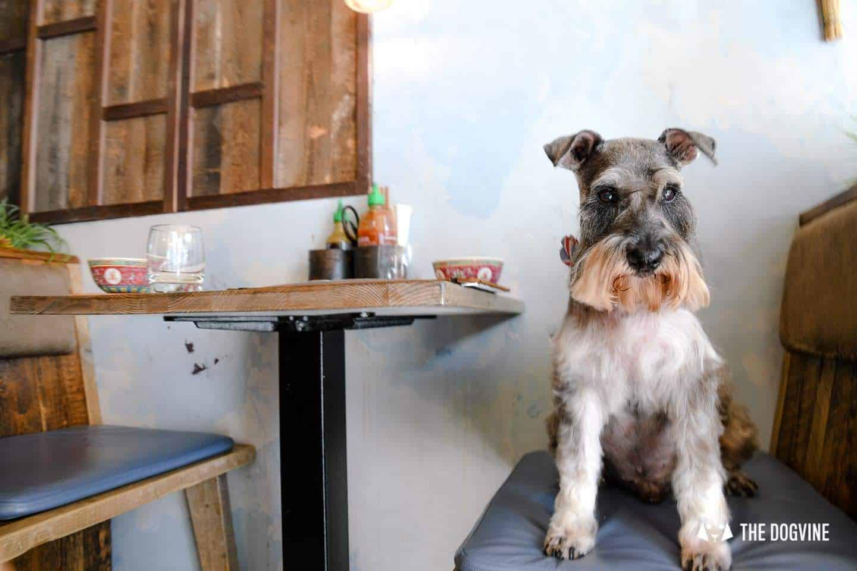 My Dog Friendly London By Pepper Chung the Schnauzer - Dog Friendly Notting Hill 13