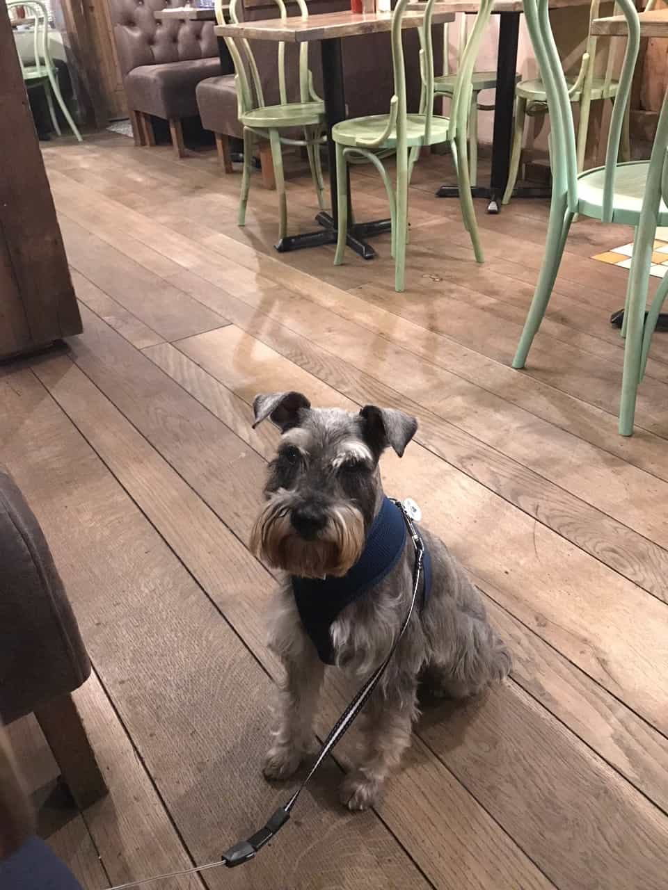 My Dog Friendly London By Pepper Chung the Schnauzer - Dog Friendly Notting Hill 17