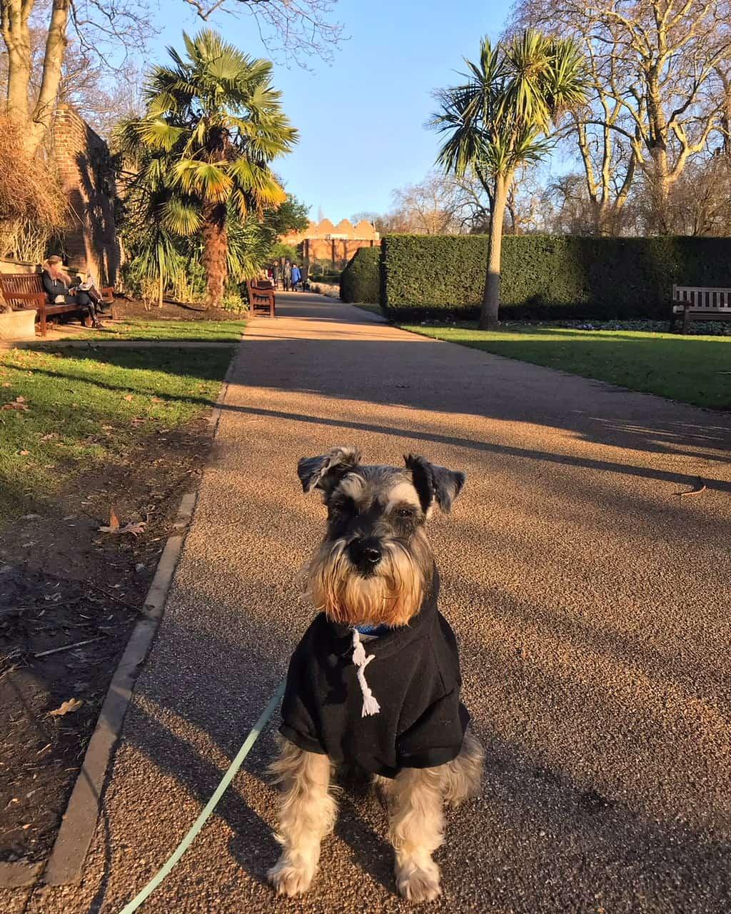 My Dog Friendly London By Pepper Chung the Schnauzer - Dog Friendly Notting Hill 18