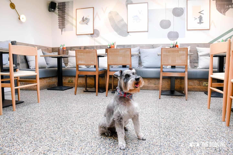 My Dog Friendly London By Pepper Chung the Schnauzer - Dog Friendly Notting Hill 25