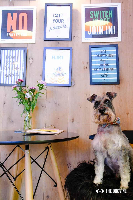 My Dog Friendly London By Pepper Chung the Schnauzer - Dog Friendly Notting Hill 5
