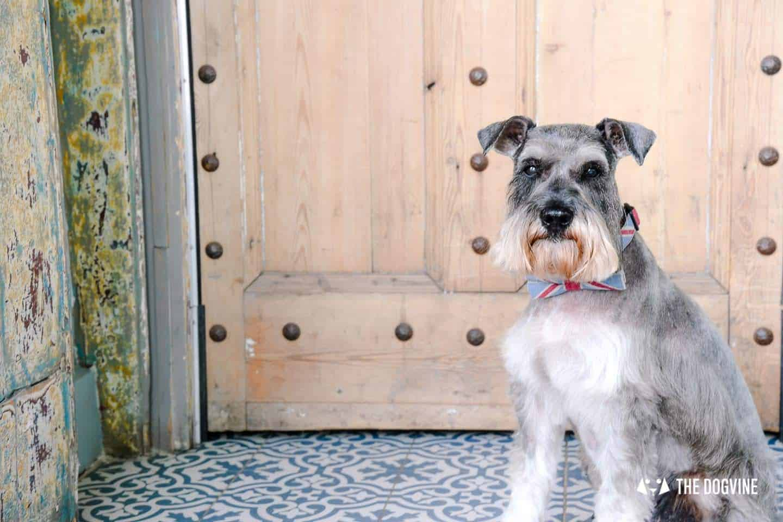 My Dog Friendly London By Pepper Chung the Schnauzer - Dog Friendly Notting Hill 7