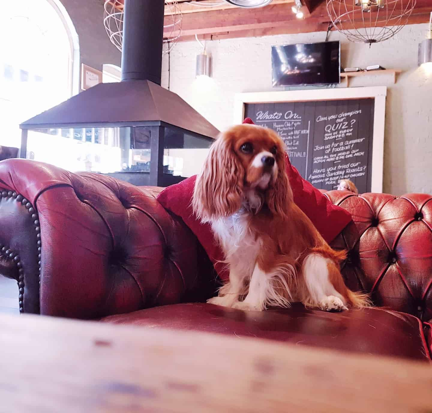 My Dog Friendly London by Amber The Cav - The Dial Arch 7