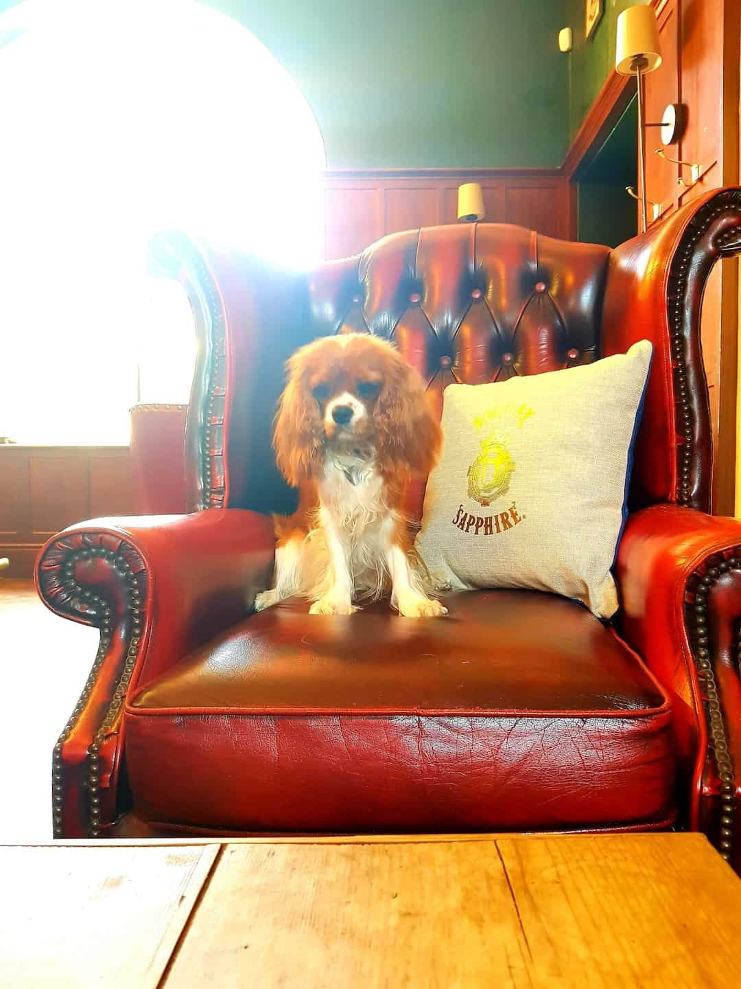 My Dog Friendly London by Amber The Cav - The Guardhouse 4