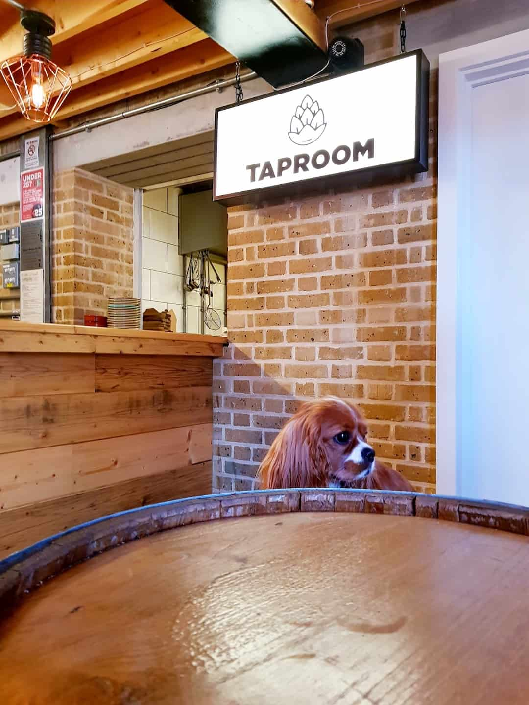 My Dog Friendly London by Amber The Cav - The Tap Room 4