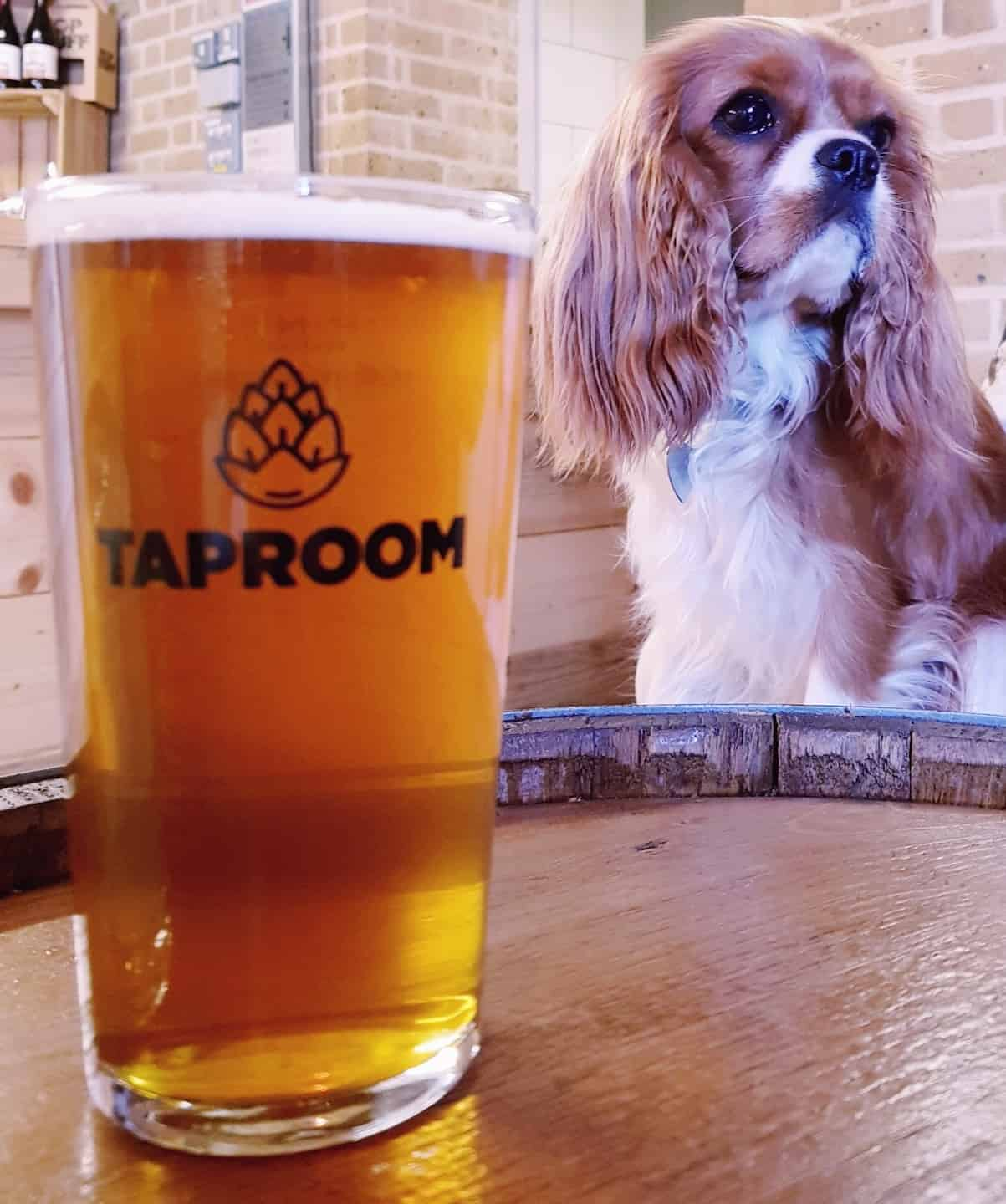 My Dog Friendly London by Amber The Cav - The Tap Room 6