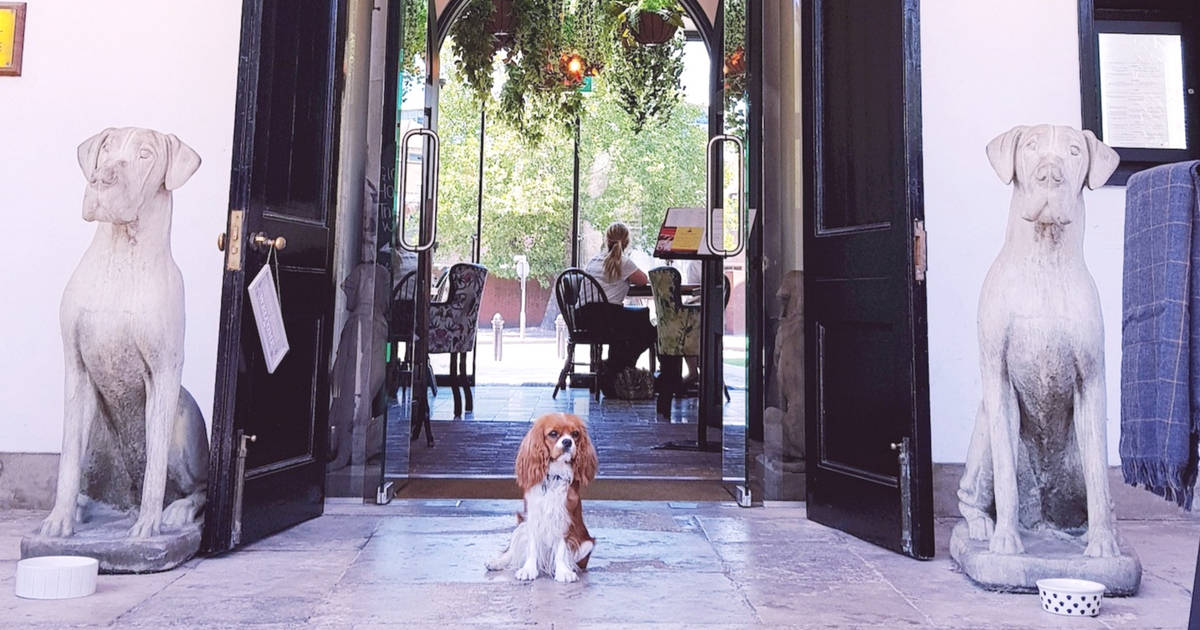 My Dog Friendly London By Amber The Cav Repawter | Woolwich