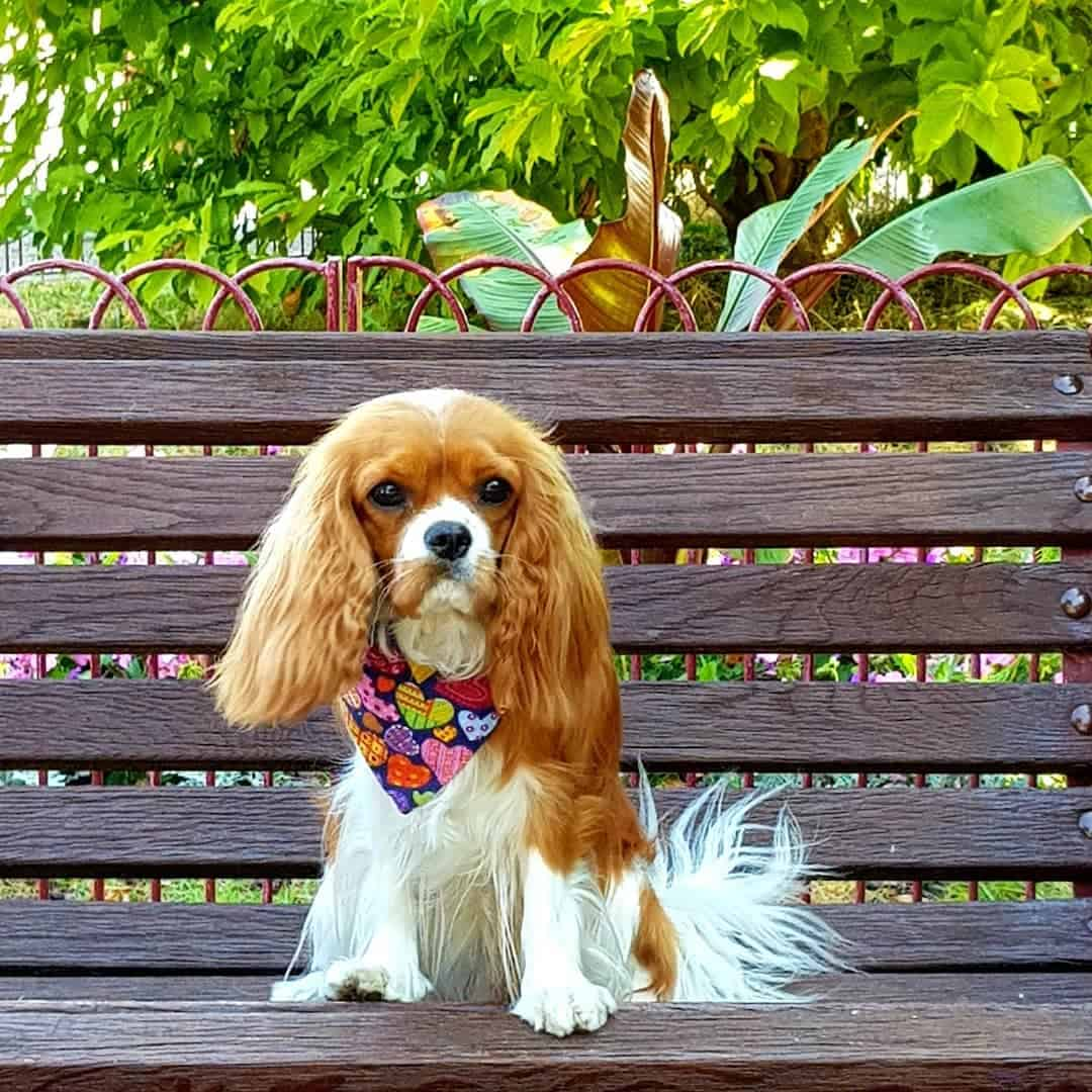My Dog Friendly London by Amber the Cav Repawter - Park