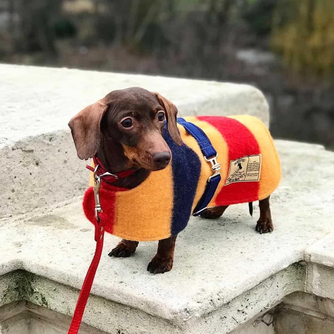 My Dog Friendly London by Pops The Sausage - Dog Friendly East London Pops in Coat