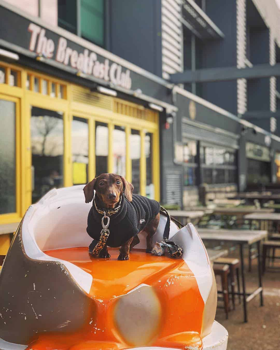 My Dog Friendly London by Pops the Sausage - Breakfast Club Hackney Wick 2