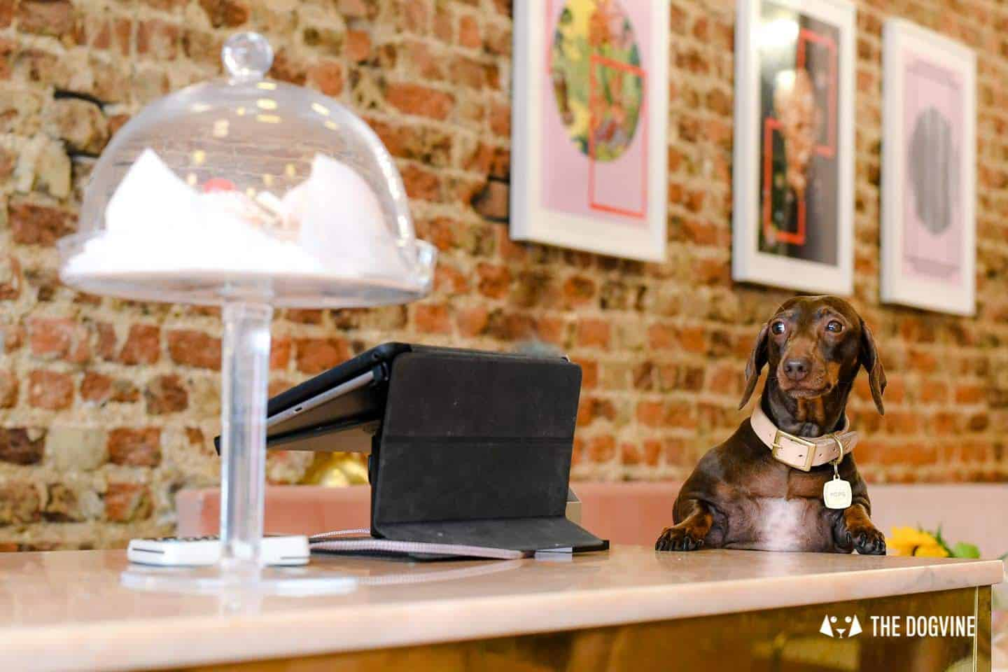 My Dog Friendly London by Pops the Sausage - Palm Vaults 2