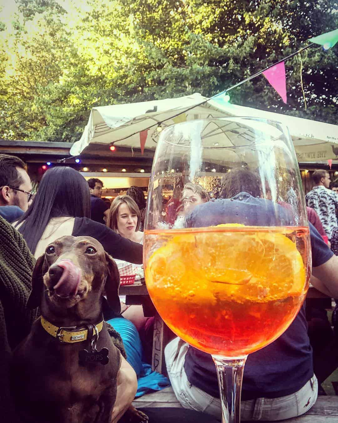 My Dog Friendly London by Pops the Sausage - Peoples Park Tavern 4