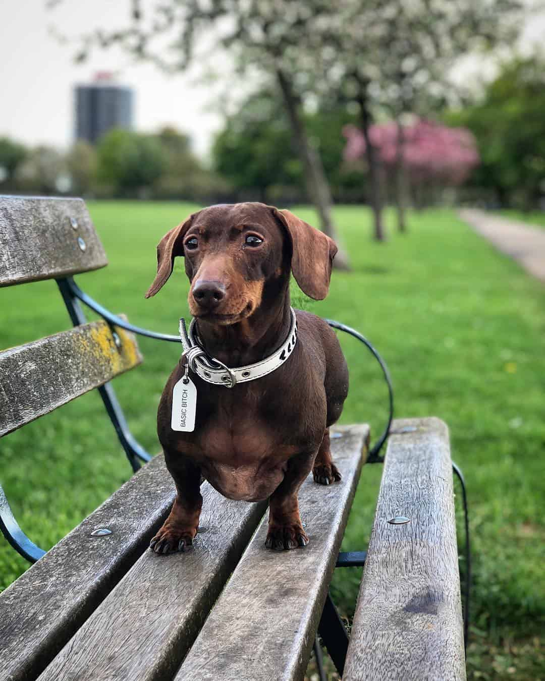 My Dog Friendly London by Pops the Sausage - Victoria Park Pops 1