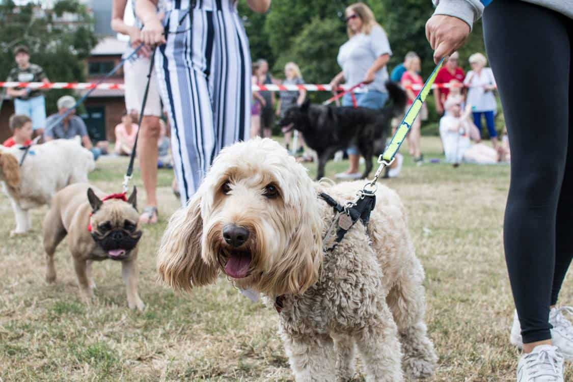 New Malden Dog Show 2018