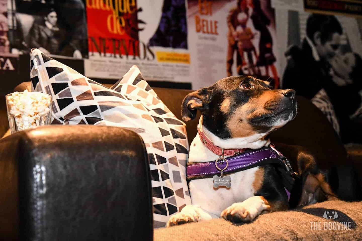 Puppy Love Brunch Cinema Club Balham - London Dog Events 2