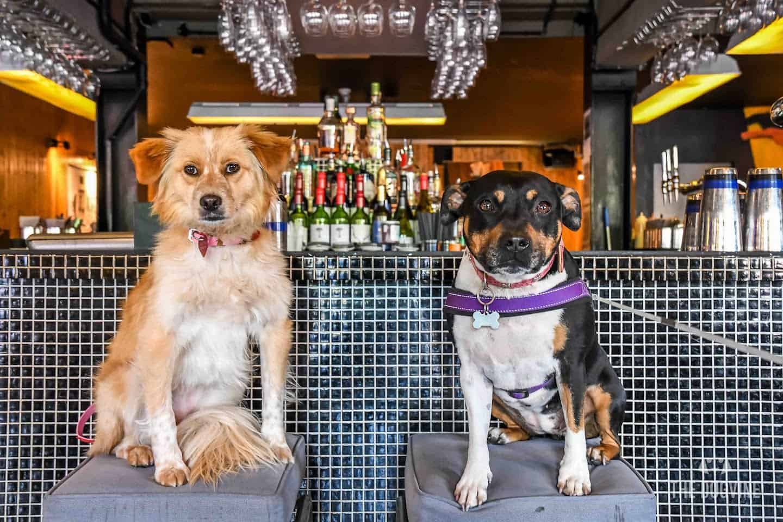 Puppy Love Brunch Outdoor Cinema | 101 Dalmatians - Bar