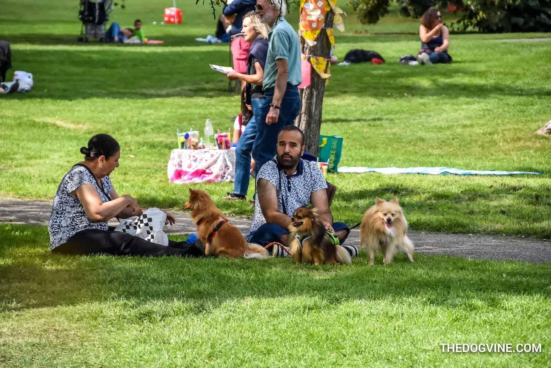 St Anne's Church Summer Fete Dog Show