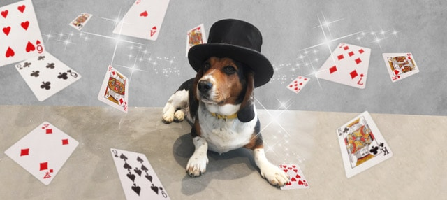 The Great Houndini Dog Friendly Magic Show Brighton