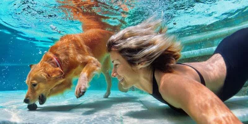 UK's First Dog Swimming Gala by Rover.com