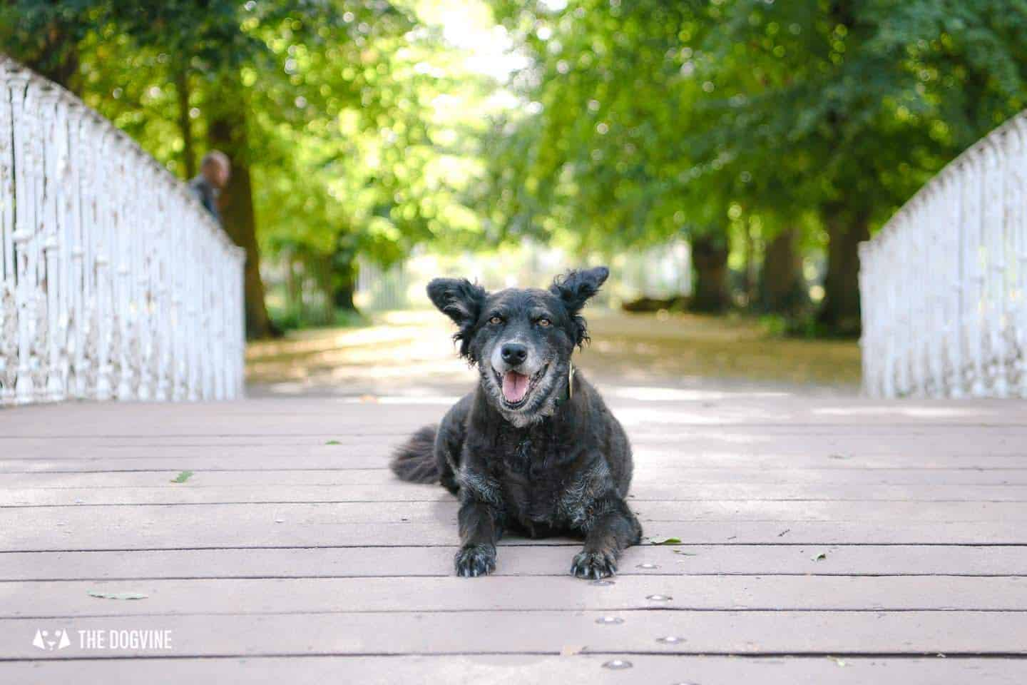 A Dogs Day Out to Dog-Friendly Morden Hall Park 23