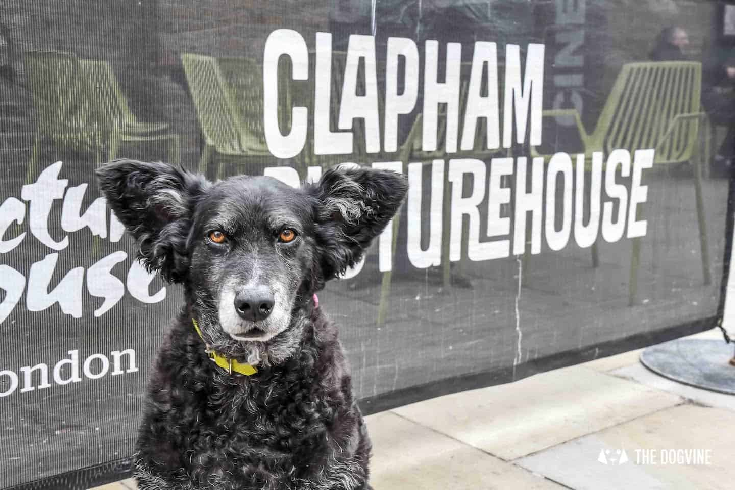 Clapham Picturehouse Dog-Friendly Cinema Christopher Robbin August 2018