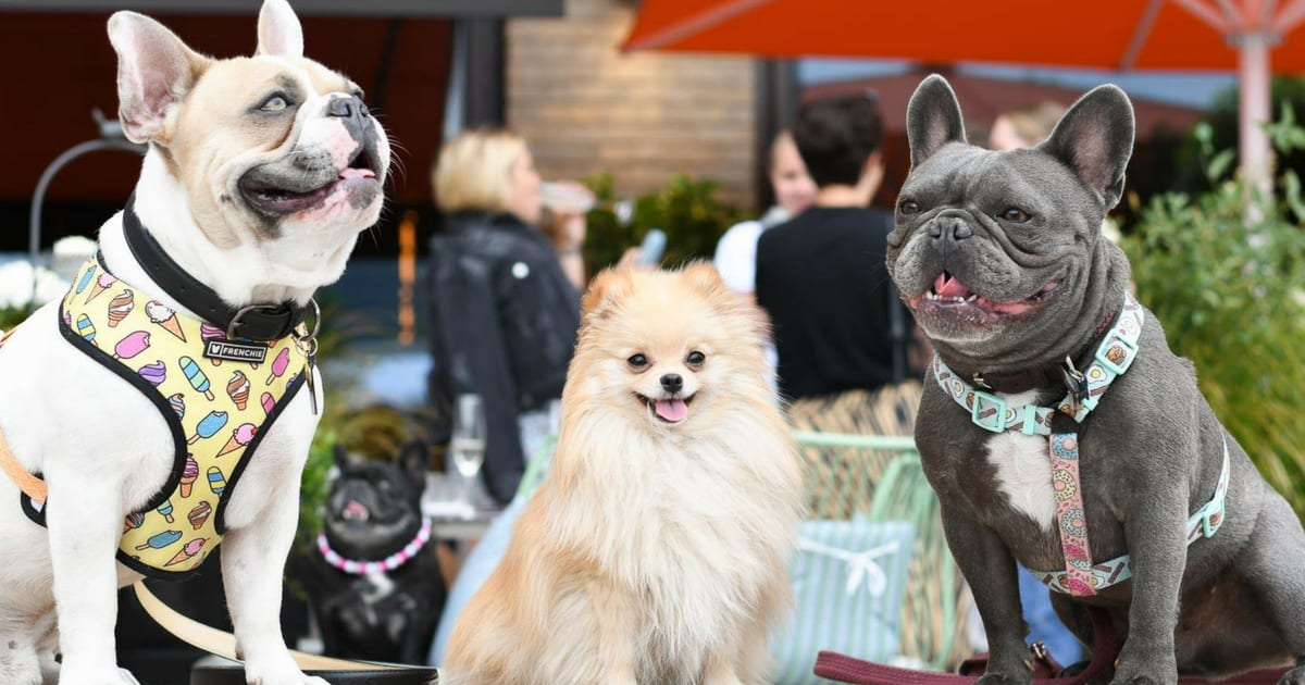 Dog Events In London This Month August 2018
