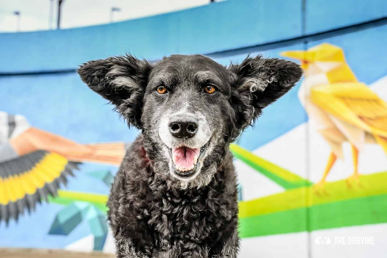 Dog Events In London This Month September 2018 Belinha London Street Art