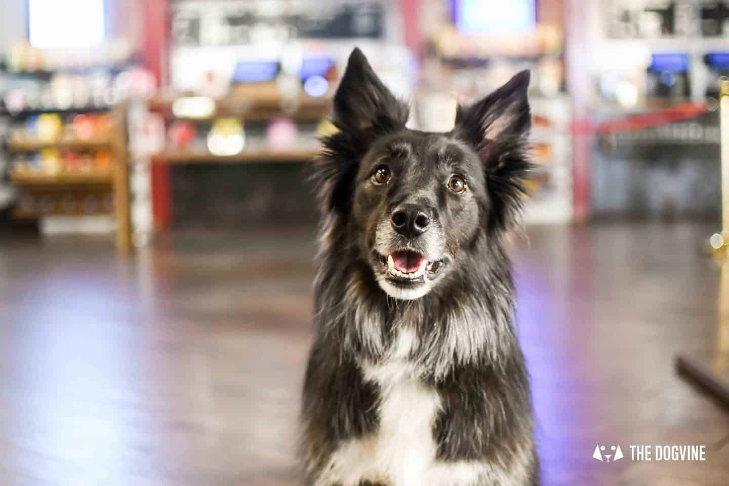 Dog-Friendly Cinema At Picturehouse Central October 2018