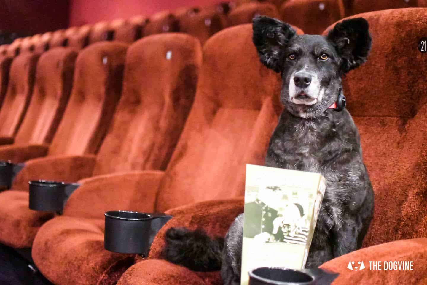 Dog-Friendly Cinema At Picturehouse Central September 2018