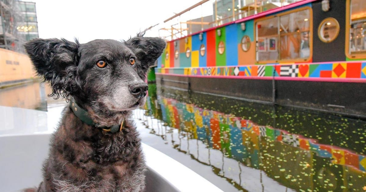 Dogs Day Out On The Canal With Dog-Friendly Go Boat London