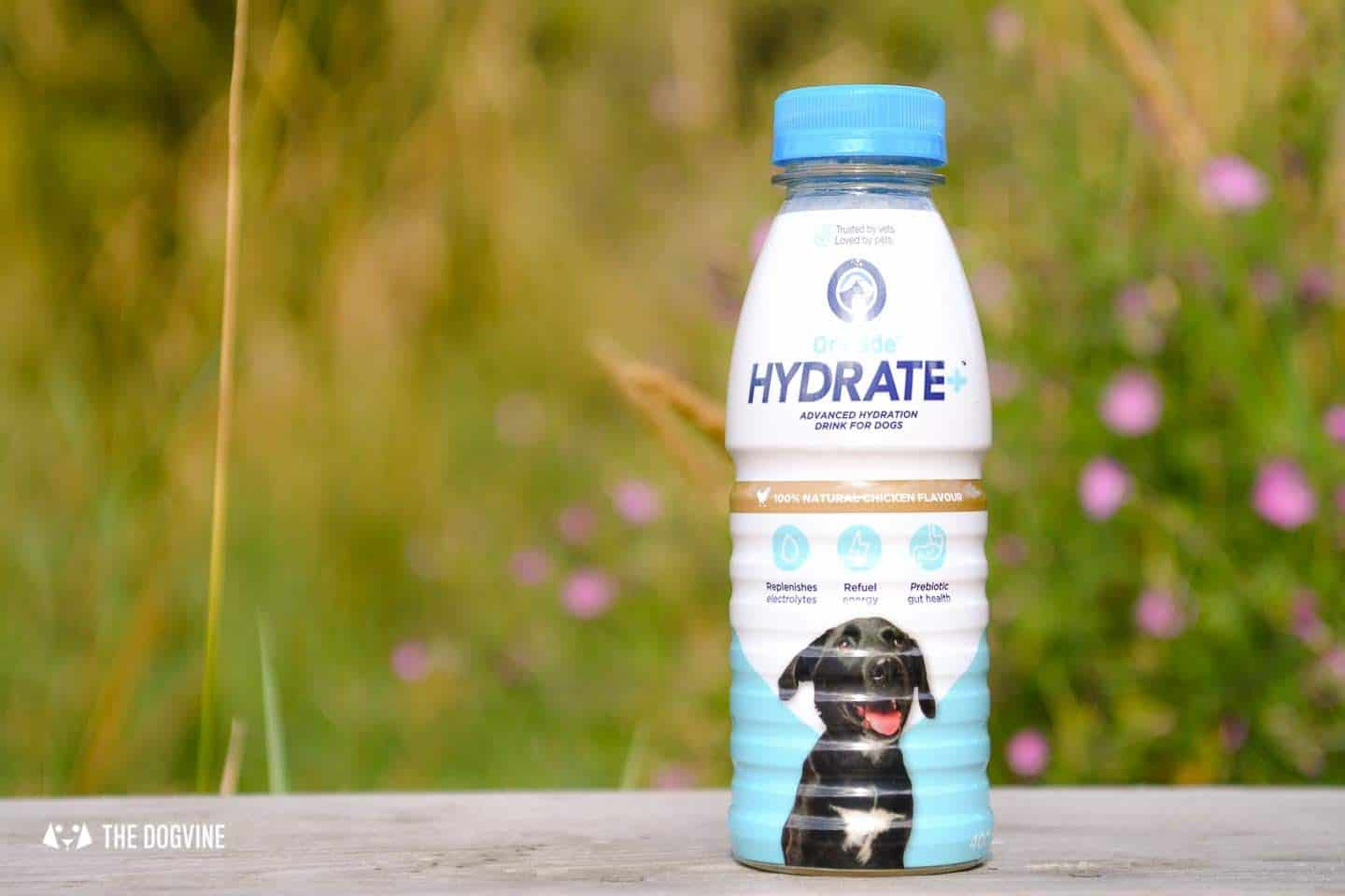Help Your Dog Hydrate with Oralade Hydrate Plus for Dogs 1