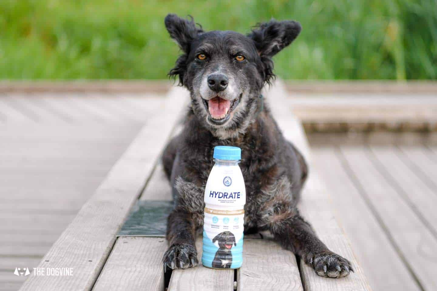 Help Your Dog Hydrate with Oralade Hydrate Plus for Dogs 11