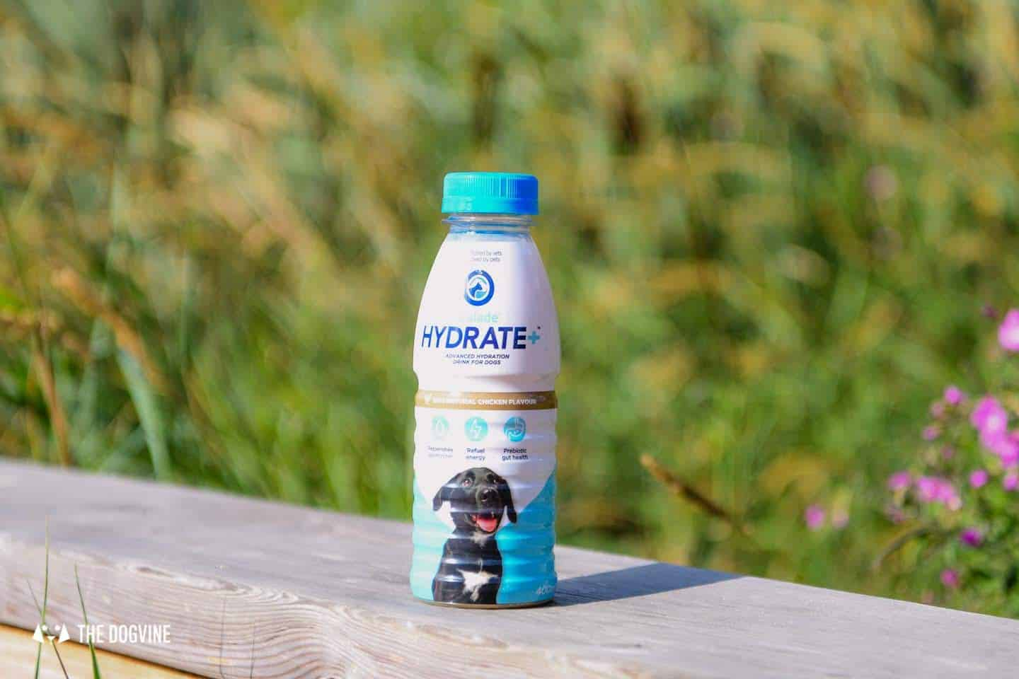 Help Your Dog Hydrate with Oralade Hydrate Plus for Dogs 2