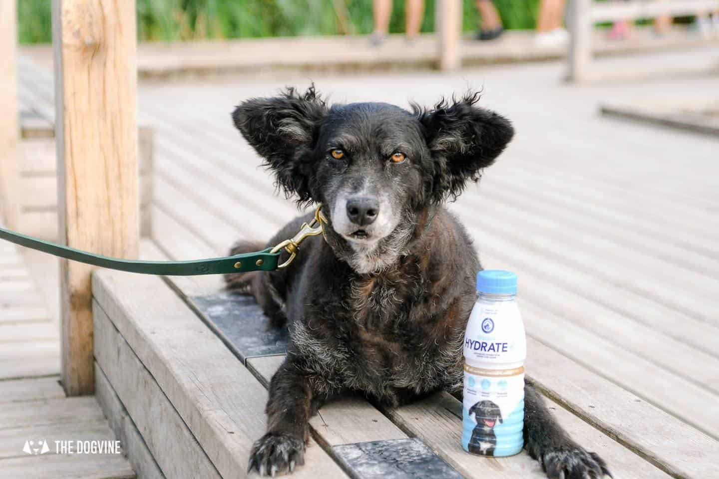 Help Your Dog Hydrate with Oralade Hydrate Plus for Dogs 3