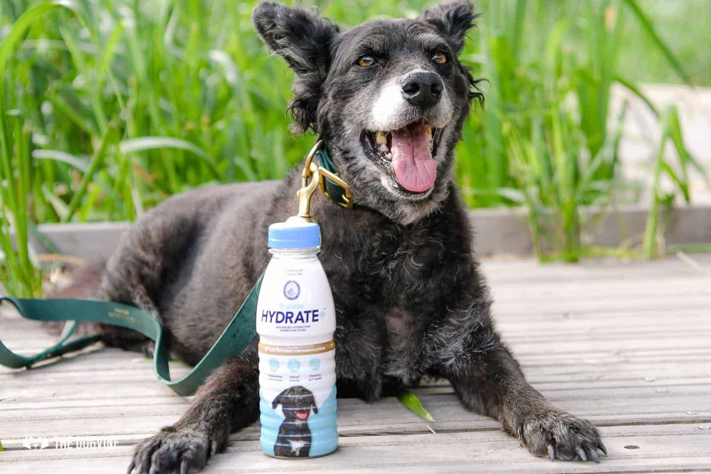 Help Your Dog Hydrate with Oralade Hydrate Plus for Dogs 4
