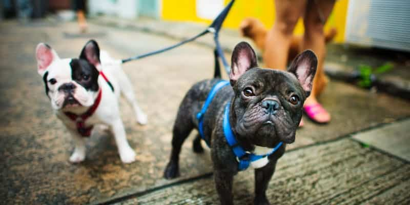 Hox Hounds Bark 'n' Breakfast at The Hoxton