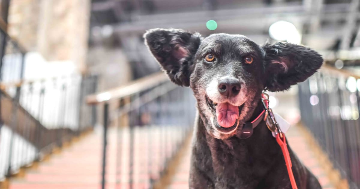 London Dog Events - Dog-Friendly Cinema At Picturehouse Central August 2018