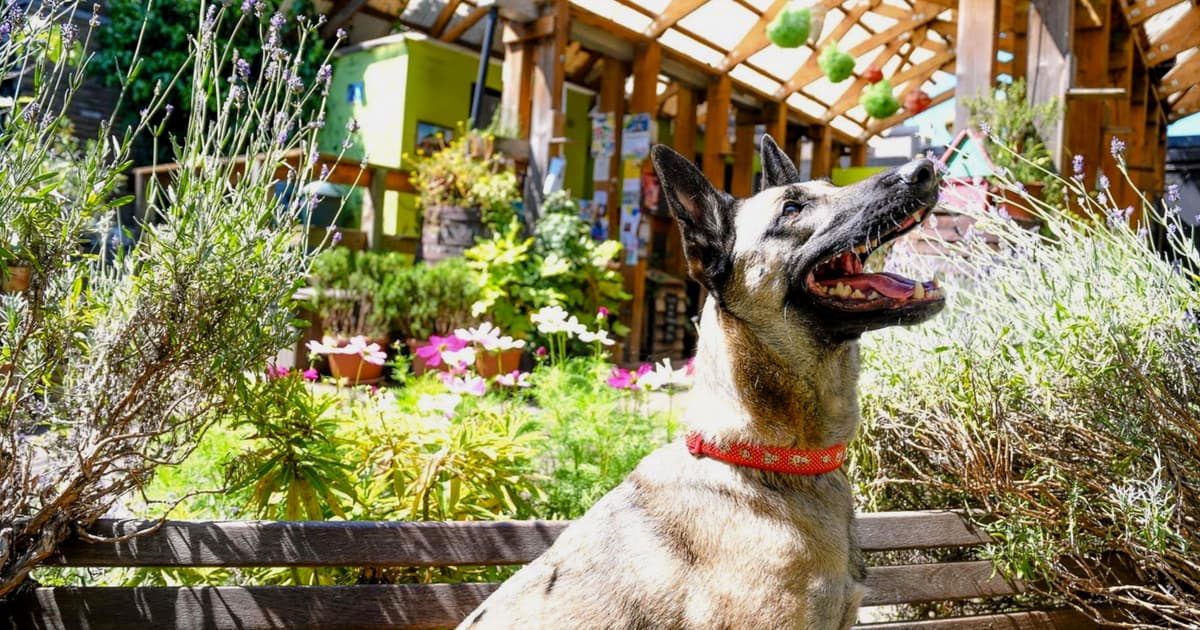 London Dog Events for the Bank Holiday Weekend | August 2018