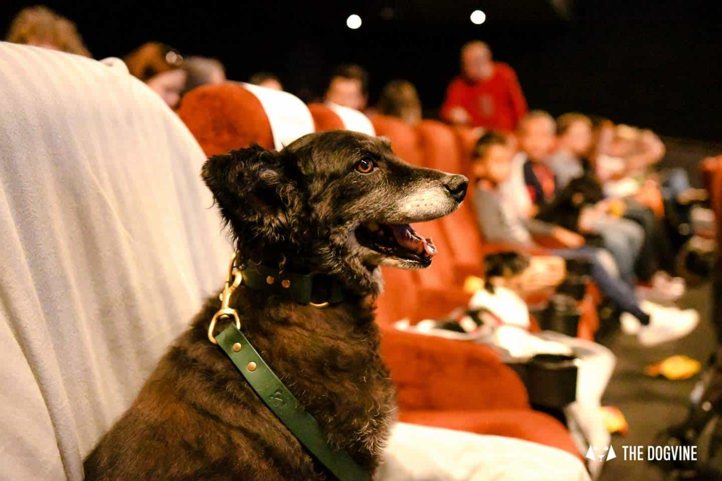 London Dogs At The Alpha Film Gala At Picturehouse Central 16