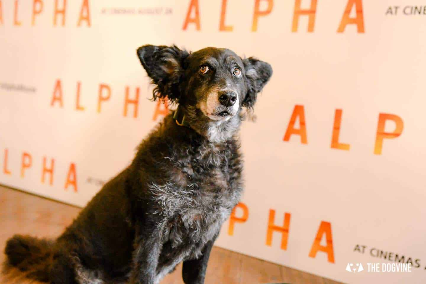 London Dogs At The Alpha Film Gala At Picturehouse Central 23